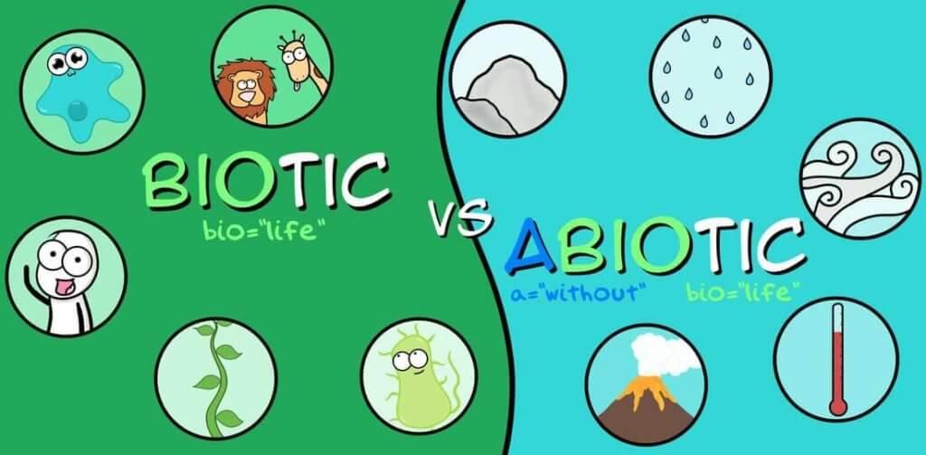 Abiotic vs. Biotic