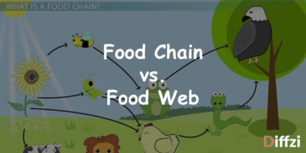 Food Chain vs. Food Web 1