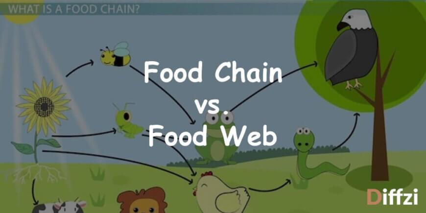 Food Chain vs. Food Web 1