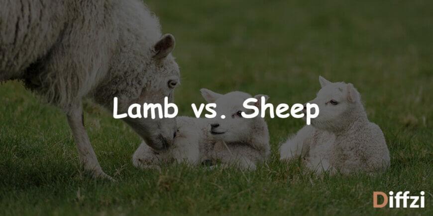 Lamb vs. Sheep