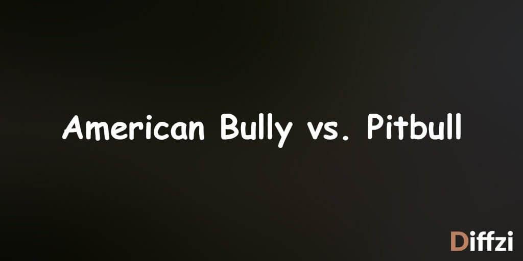American Bully vs. Pitbull