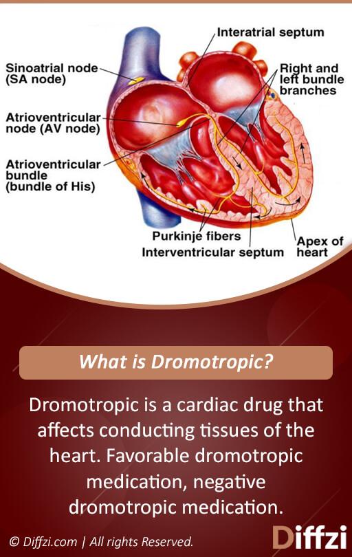 Dromotropic