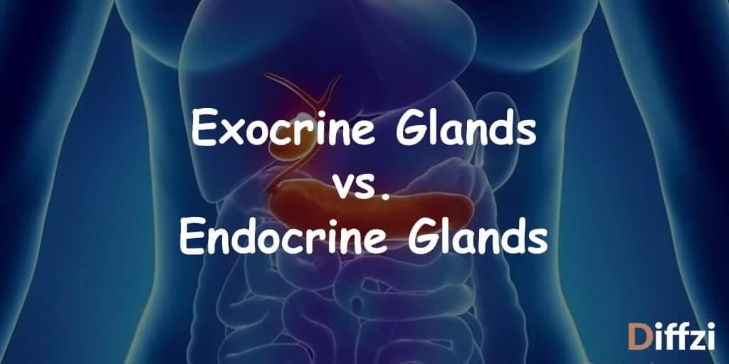 Exocrine Glands vs. Endocrine Glands