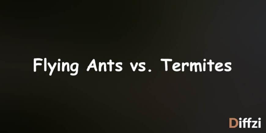 Flying Ants vs. Termites