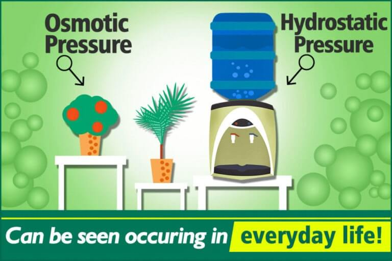 Hydrostatic Pressure vs. Osmotic Pressure
