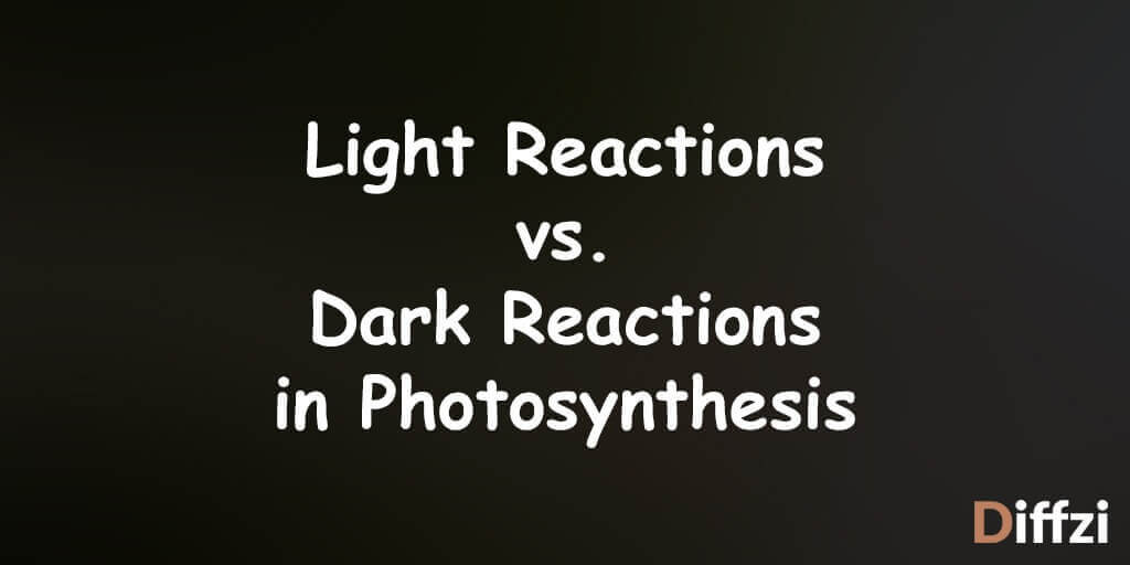 Light Reactions vs. Dark Reactions in Photosynthesis