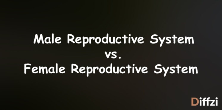 Male Reproductive System vs. Female Reproductive System