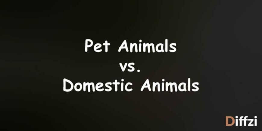 Pet Animals vs. Domestic Animals