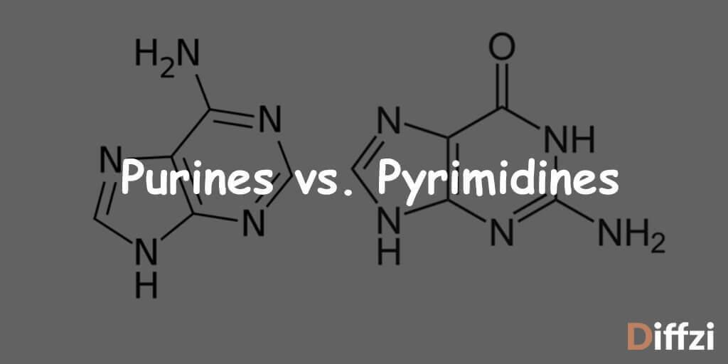 Purines vs. Pyrimidines