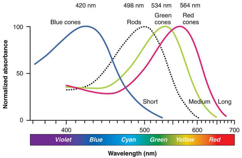 Red Light vs. Blue Light