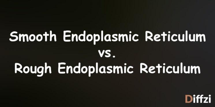 Smooth Endoplasmic Reticulum vs. Rough Endoplasmic Reticulum
