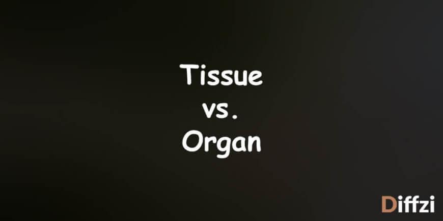 Tissue vs. Organ