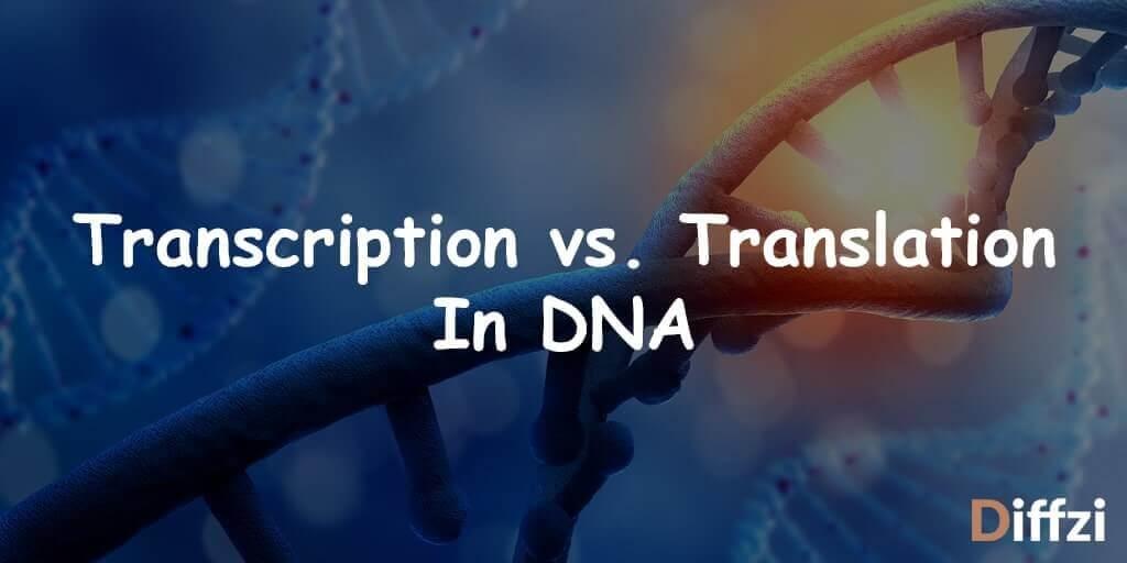 Transcription vs. Translation In DNA