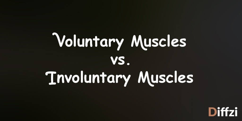 Voluntary Muscles vs. Involuntary Muscles