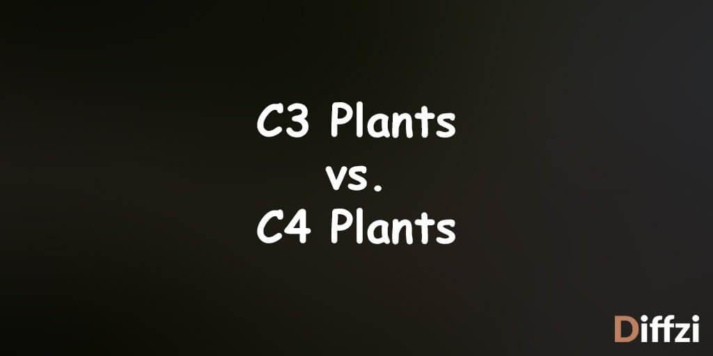 C3 Plants vs. C4 Plants