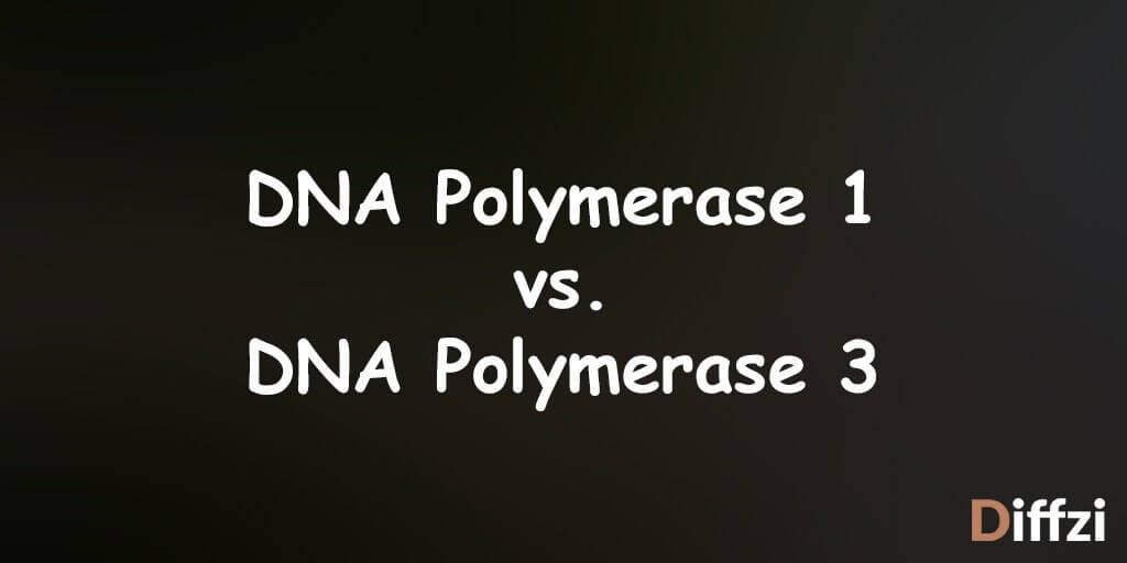DNA Polymerase 1 vs. DNA Polymerase 3