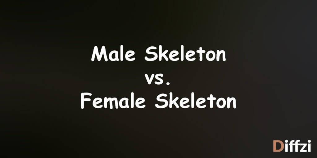 Male Skeleton vs. Female Skeleton