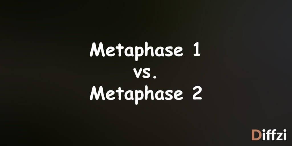 Metaphase 1 vs. Metaphase 2