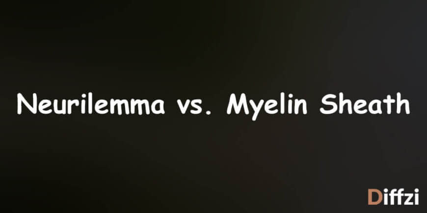 Neurilemma vs. Myelin Sheath