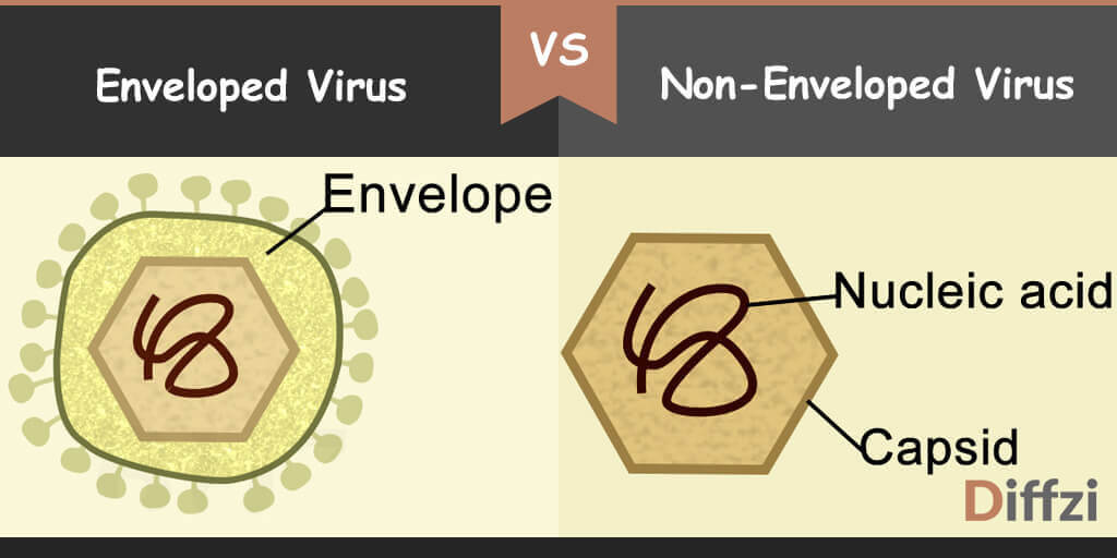 enveloped virus vs non enveloped virus