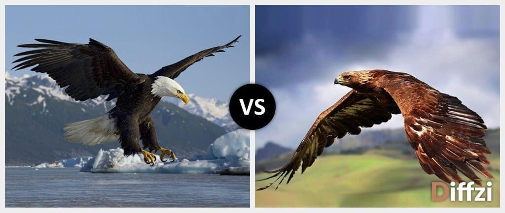 Eagle vs. Hawk