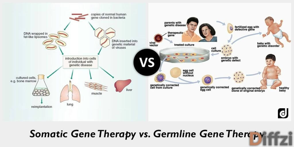 Somatic Gene Therapy vs. Germline Gene Therapy