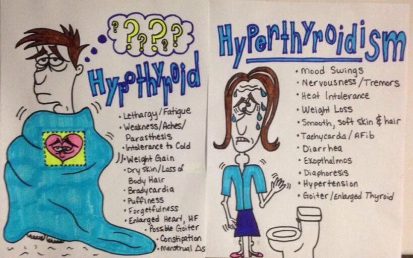 Hypothyroid vs. Hyperthyroid