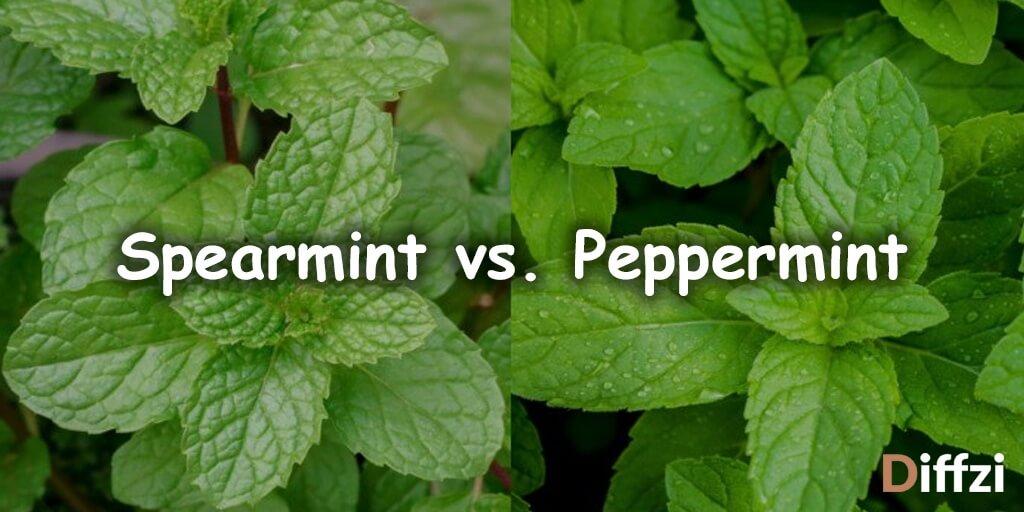 Spearmint vs. Peppermint