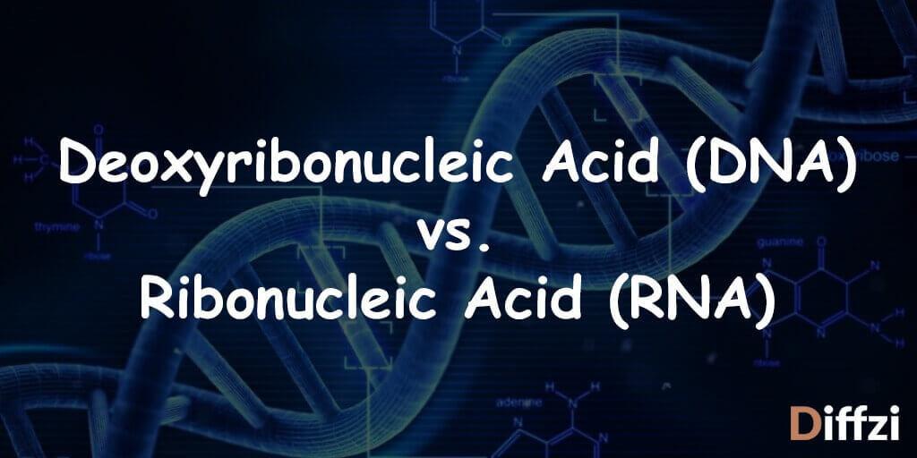 Deoxyribonucleic Acid DNA vs. Ribonucleic Acid RNA