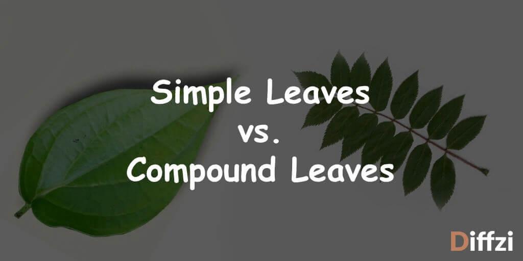 Simple Leaves vs. Compound Leaves