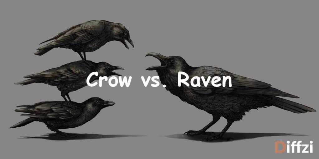 Crow vs. Raven