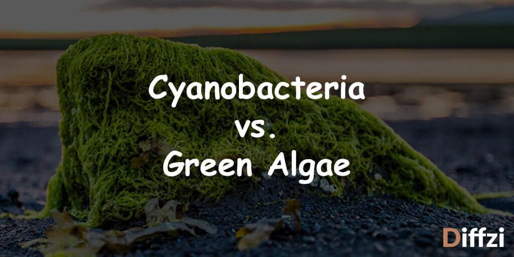 Cyanobacteria vs. Green Algae