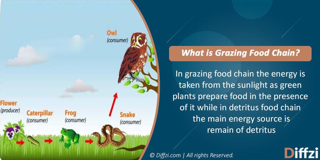 Grazing Food Chain