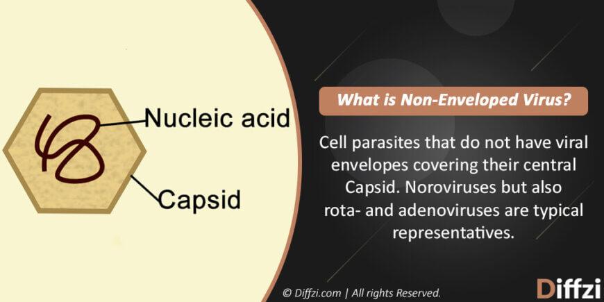 Non Enveloped Virus