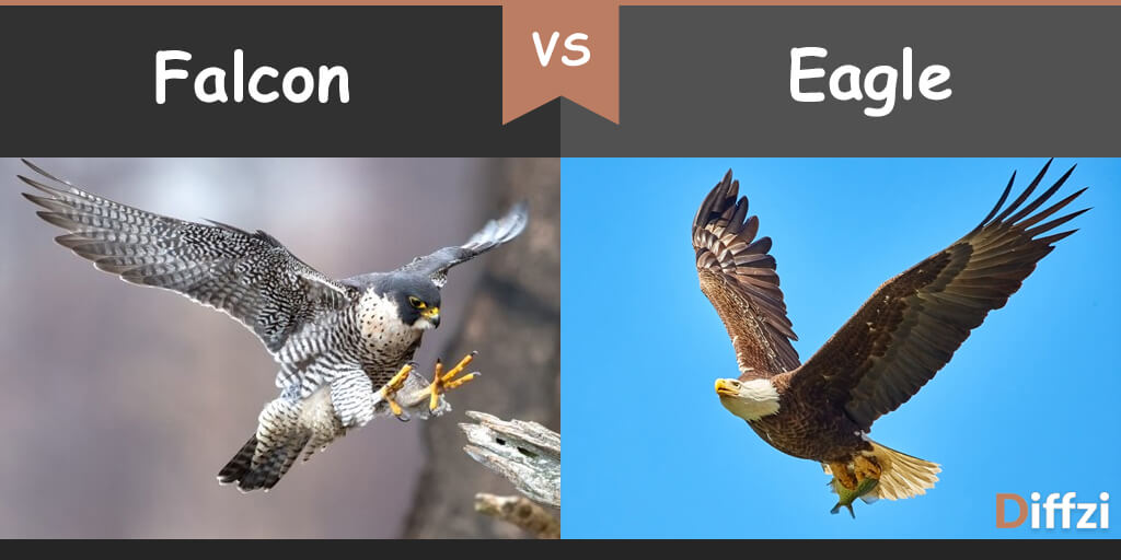falcon vs eagle